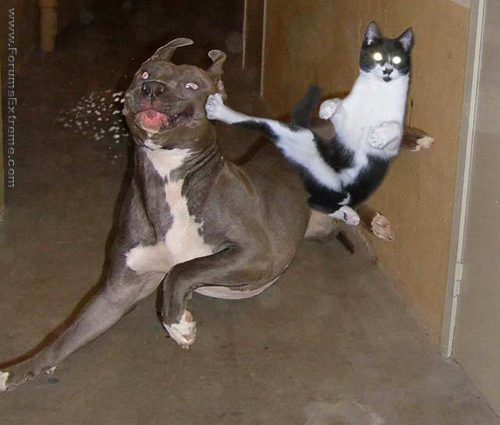 Funny_Pictures_General_Karate_Cat